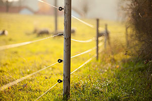 electric_fencing_1333215038